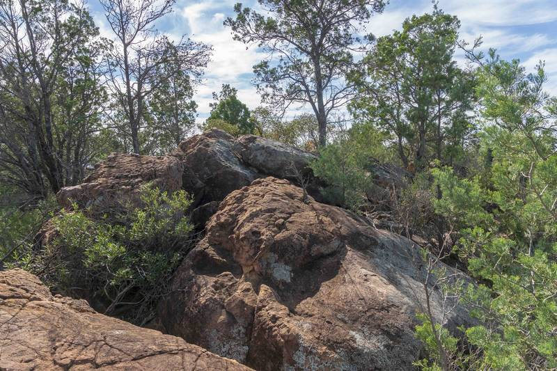 Terrain and vegetation along summit ridge