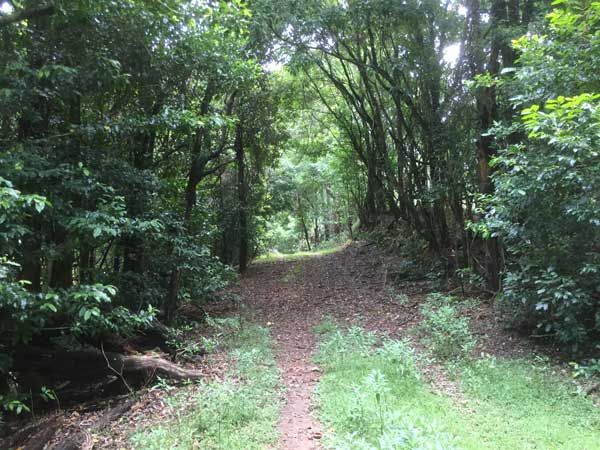 path_600